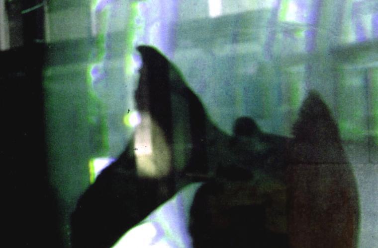 Underwater05.jpg
